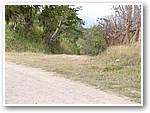 Camino por donde don Sergio huyó de los mariachis